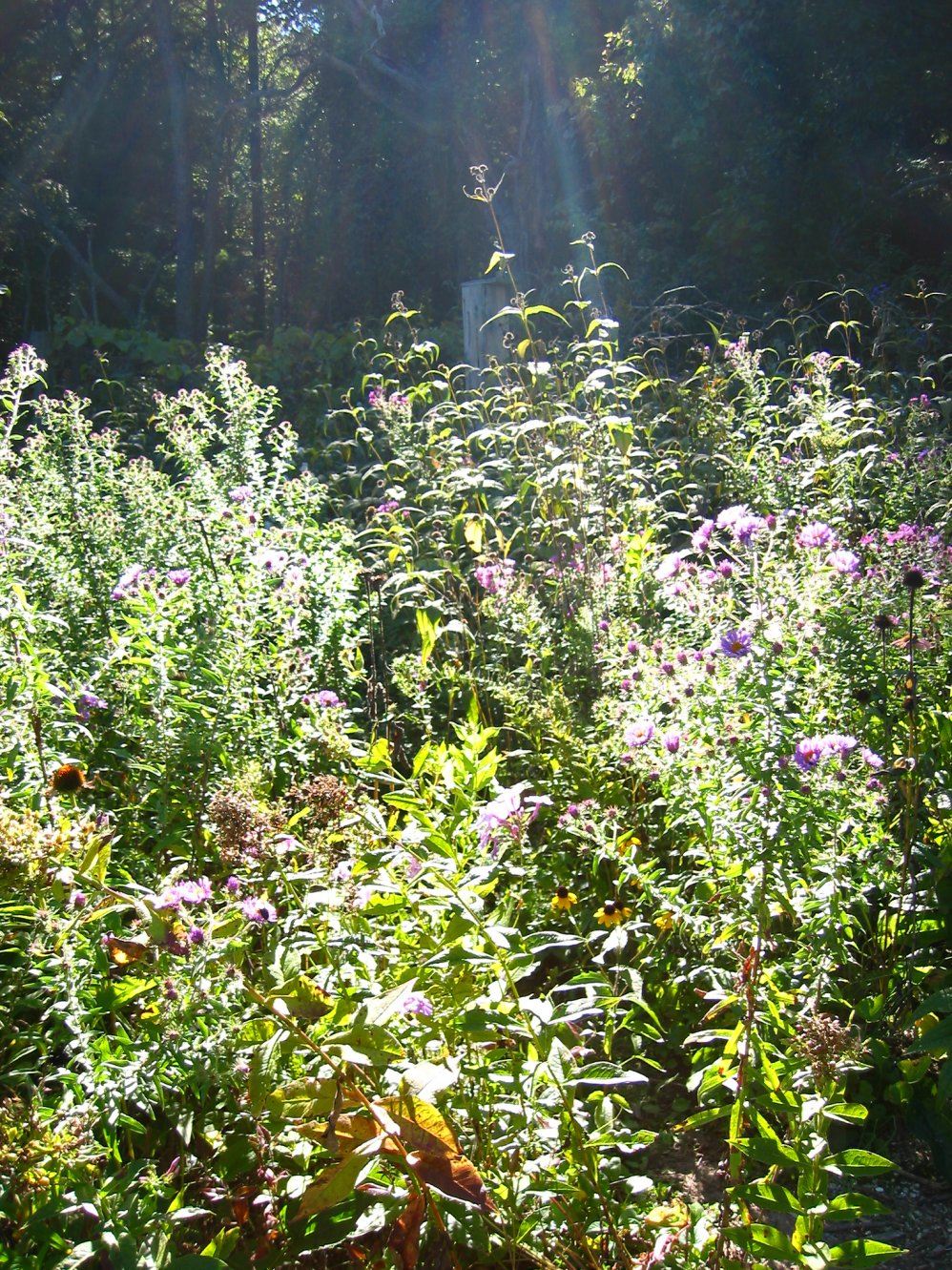 Lapham Peak Butterfly Garden - some manmade nature - sept 2007....soul-amp.com