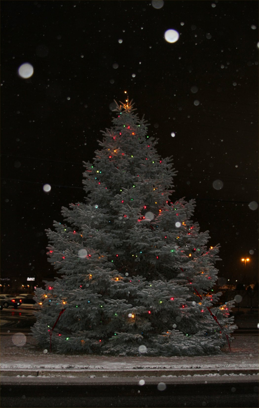 Christmas Tree in West Allis, WI 2009 - soul-amp.com